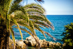 Palm on the coast of Lloret de Mar. Spain Stock Photos
