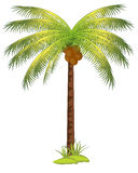 Palm with coco. The Tropical tree palm with fruit coco.Vector illustration vector illustration