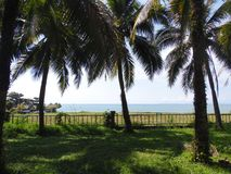 Palm coconut tree, exotic sunny landscape with sea view. Green grass, blue sea and sky. Bright sun Royalty Free Stock Photography