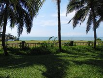 Palm coconut tree, exotic sunny landscape with sea view. Green grass, blue sea and sky. Bright sun Stock Image
