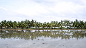 Palm coconut tree reflection in the water. Tranquil idyllic scene of palm coconut tree reflection in the water stock video footage