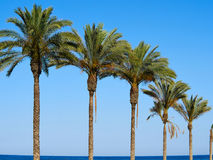 Palm coconut trees on a beautiful beach Royalty Free Stock Photography