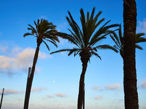 Palm coconut trees on a beautiful beach Royalty Free Stock Photos