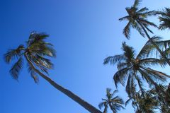 Palm coconut trees and bright blue sky on the beach stock images
