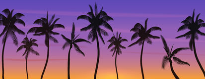 Palm coconut trees Silhouette at sunset or sunrise. Realistic banner vector illustration. Beach paradise. Palm coconut trees Silhouette at sunset or sunrise Royalty Free Stock Photos