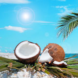 Palm and coconuts under the sun. Palm branch over two coconuts by the shore Royalty Free Stock Photography