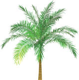 Palm color. Colored palm illustration. Made by 3d application Stock Photos