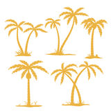 Palm Contours. Vector Palm tree Contours isolated on white Stock Photos