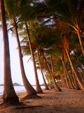 Palm cove australia. Palm trees on the beach in cairns australia Stock Image