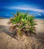 PALM-CRETE ISLAND-INTRALEX 2016. Small palm tree on the beach with the shadows of the sunset and blue skye at the backround Stock Photos