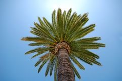 Palm Crown Royalty Free Stock Photography