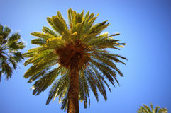 Palm crown Stock Images
