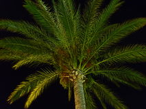 Palm Crown. In the dark stock photos