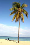 Palm on Cuban beach. Lonely girl on sand beach in Cuba near Havana royalty free stock photos