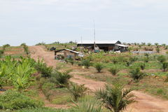 Free Palm Cultivation Farmer Work House Stock Photography - 50812022