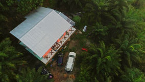 Palm cultivation at ranau sabah royalty free stock photo