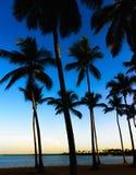 Palm dawn morning Stock Photo
