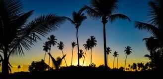 Palm dawn morning Stock Image
