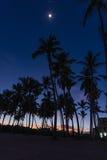Palm dawn morning Stock Photos