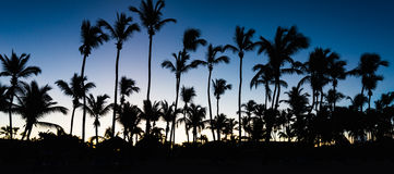 Palm dawn morning Royalty Free Stock Images