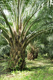 Palm Day Outdoor Farm Crop Royalty Free Stock Photography
