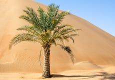 Palm in de duinen van woestijnliwa Royalty-vrije Stock Afbeelding