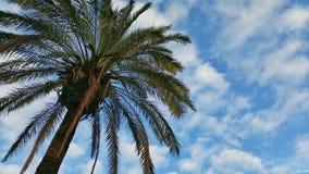 Palm in de hemel Stock Foto's