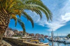 Palm in de kleine haven van Stintino royalty-vrije stock afbeeldingen