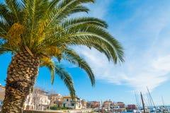 Palm in de kleine haven van Stintino stock afbeelding