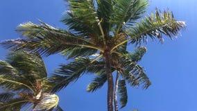 Palm in de wind stock footage