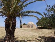 Palm in de woestijn? royalty-vrije stock foto's
