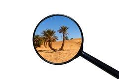 Palm in de woestijn van de Sahara stock illustratie