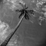Palm in de wolken stock afbeelding