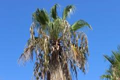 Palm in de zon royalty-vrije stock afbeeldingen