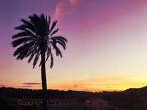 Palm in de zonsondergang Stock Afbeelding