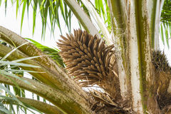 The palm. Royalty Free Stock Photo
