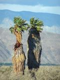 Palm desert Royalty Free Stock Photos
