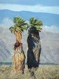 Palm Desert Photos libres de droits