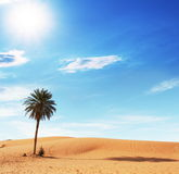 Palm in desert Stock Image