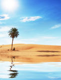 Palm in desert Royalty Free Stock Images