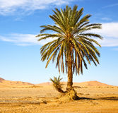 palm in the desert stock photography