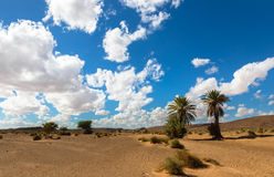 Palm in the  desert oasis morocco Stock Photo