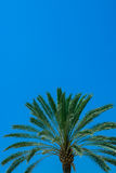 Palm detail blue sky Royalty Free Stock Photography