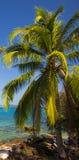 Palm dichtbij blauwe overzees Royalty-vrije Stock Foto