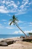 Palm dichtbij de oceaankust Stock Foto
