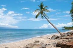 Palm dichtbij de oceaankust Stock Fotografie