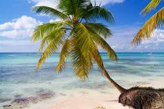 Palm die over de Caraïbische Zee buigen stock foto