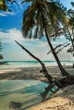 Palm door de oceaan Stock Foto's