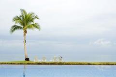 Palm door een zwembad royalty-vrije stock foto