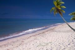Palm door het overzees Stock Afbeeldingen